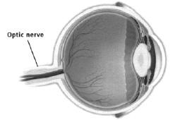eye_nerve